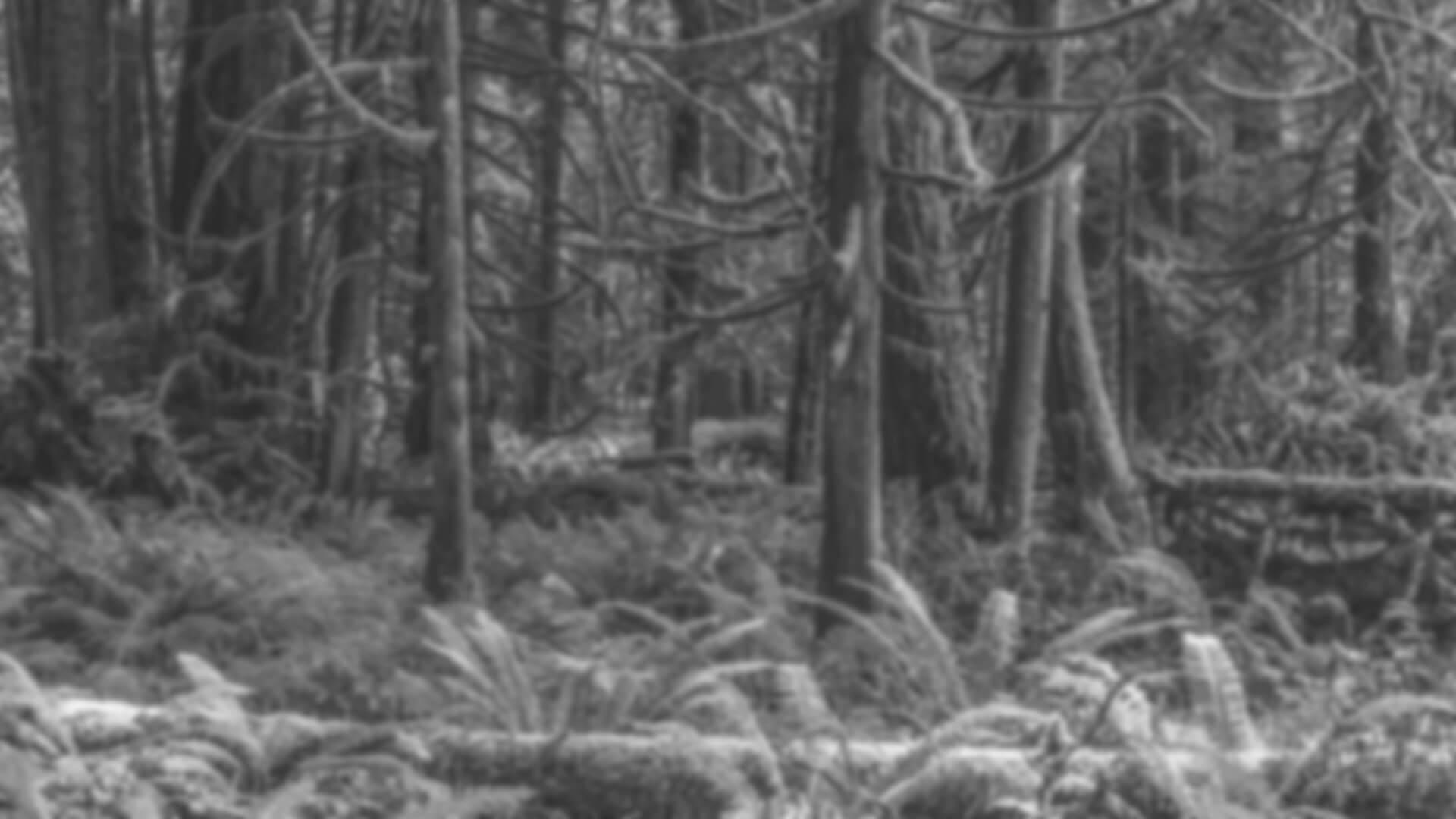 Mit Farn bewachsenes Waldstück